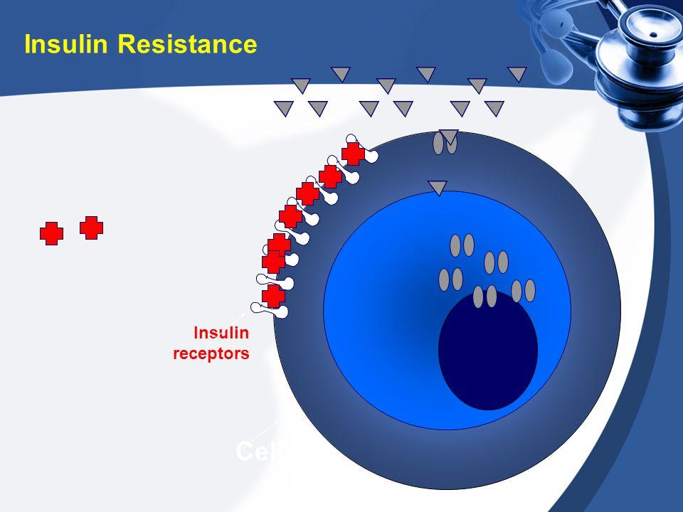 Insulin receptors Cell Insulin Resistance