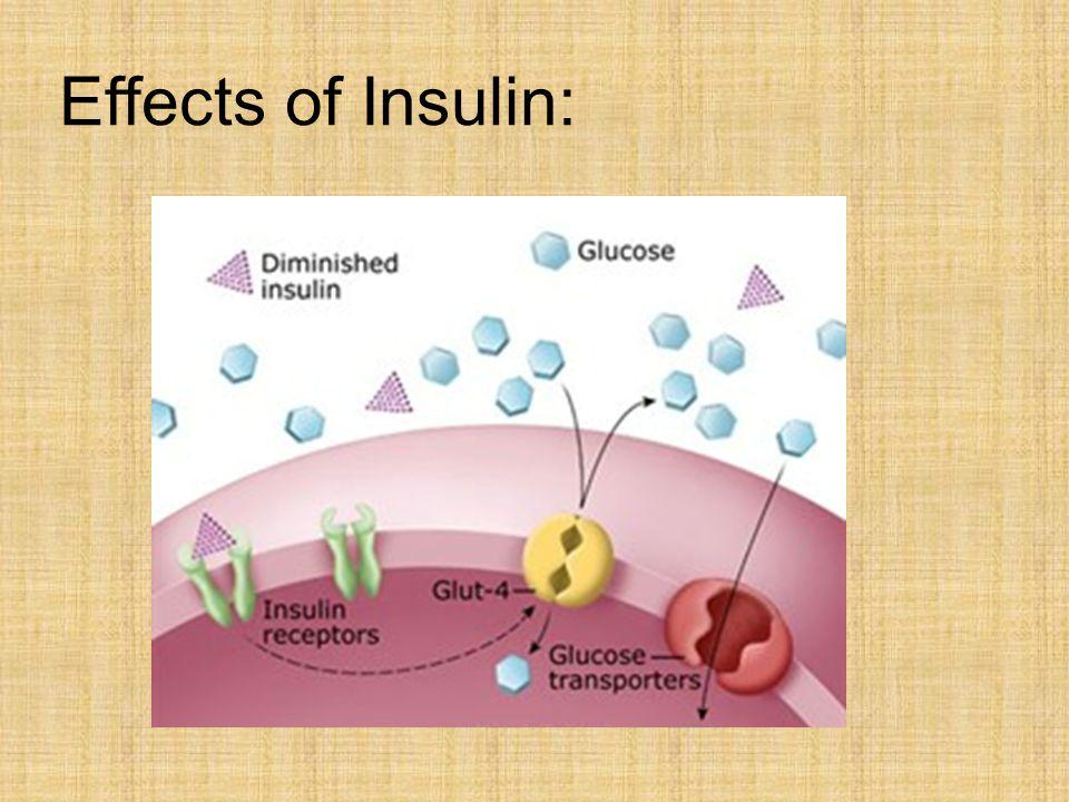Effects of Insulin: