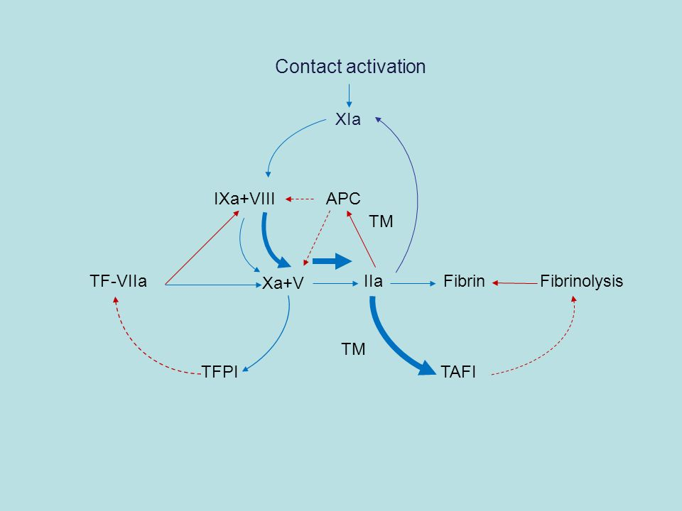 Contact activation XIa IXa+VIII APC TM TF-VIIa Xa+V IIaFibrinFibrinolysis TAFI TFPI TM