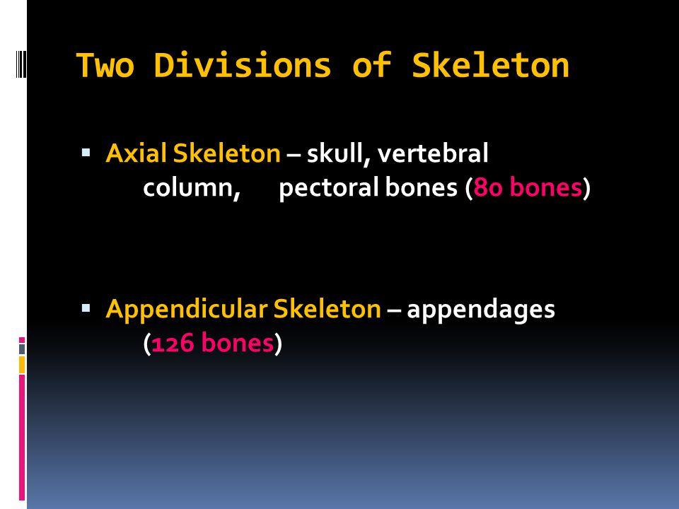 Two Divisions of Skeleton  Axial Skeleton – skull, vertebral column, pectoral bones (80 bones)  Appendicular Skeleton – appendages (126 bones)