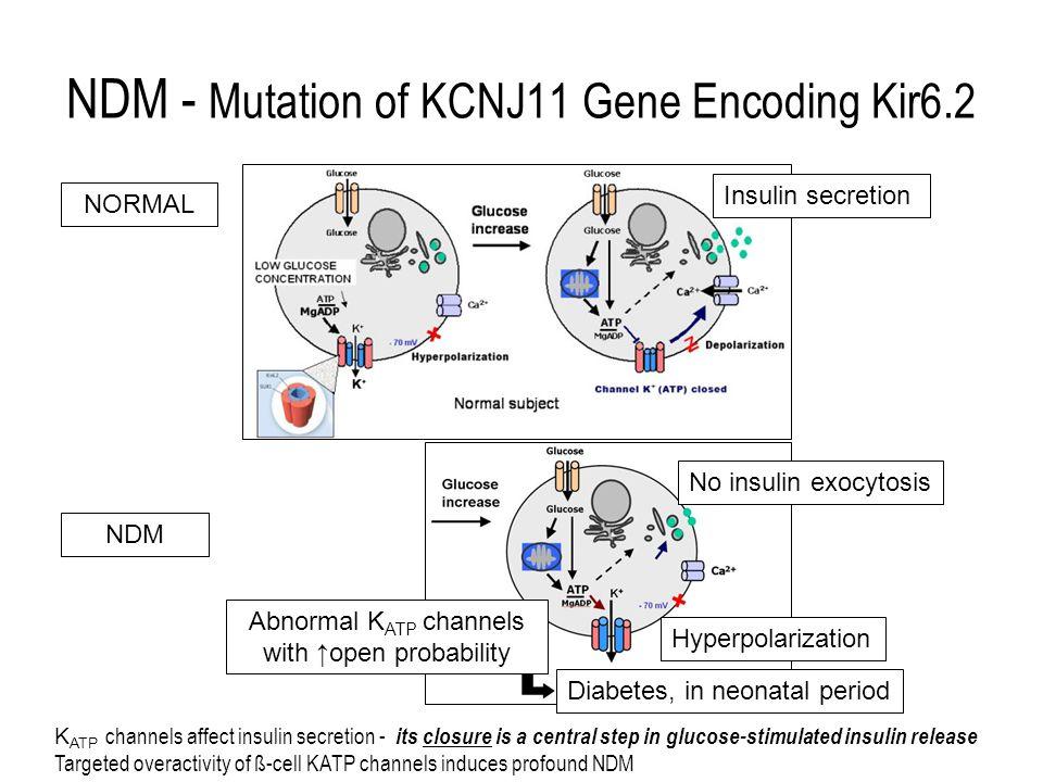 20091219 S Chan-Cua NDM - Mutation of KCNJ11 Gene Encoding Kir6.2 No insulin exocytosis Insulin secretion Hyperpolarization Abnormal K ATP channels wi