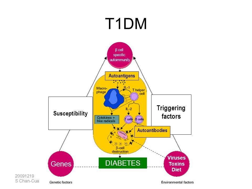 20091219 S Chan-Cua T1DM β cell specific autoimmunity Genes Viruses Toxins Diet Susceptibility DIABETES Triggering factors Autoantigens Autoantibodies