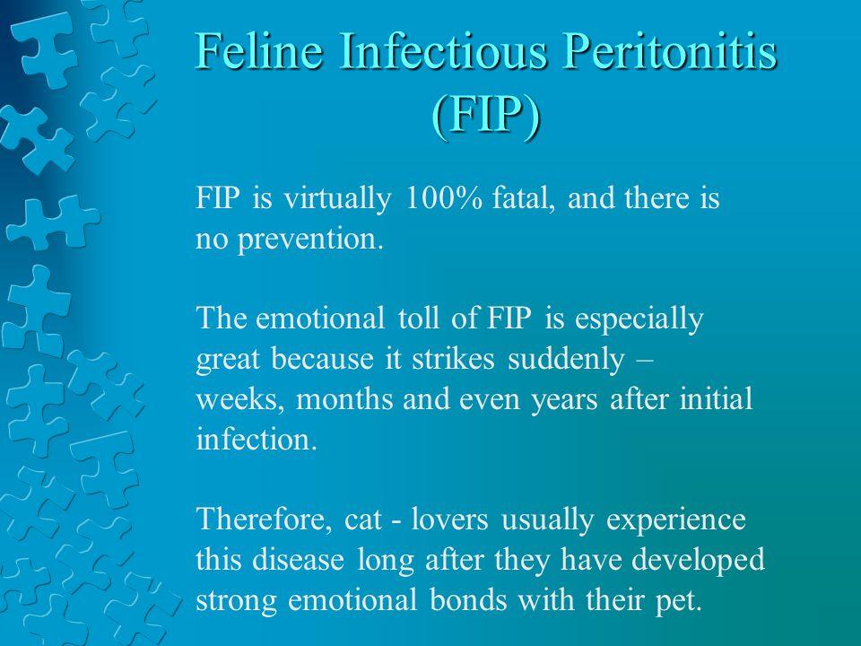 Feline Infectious Peritonitis (FIP) Feline Infectious Peritonitis (FIP) The worst 3 letters a cat – lover could ever hear.