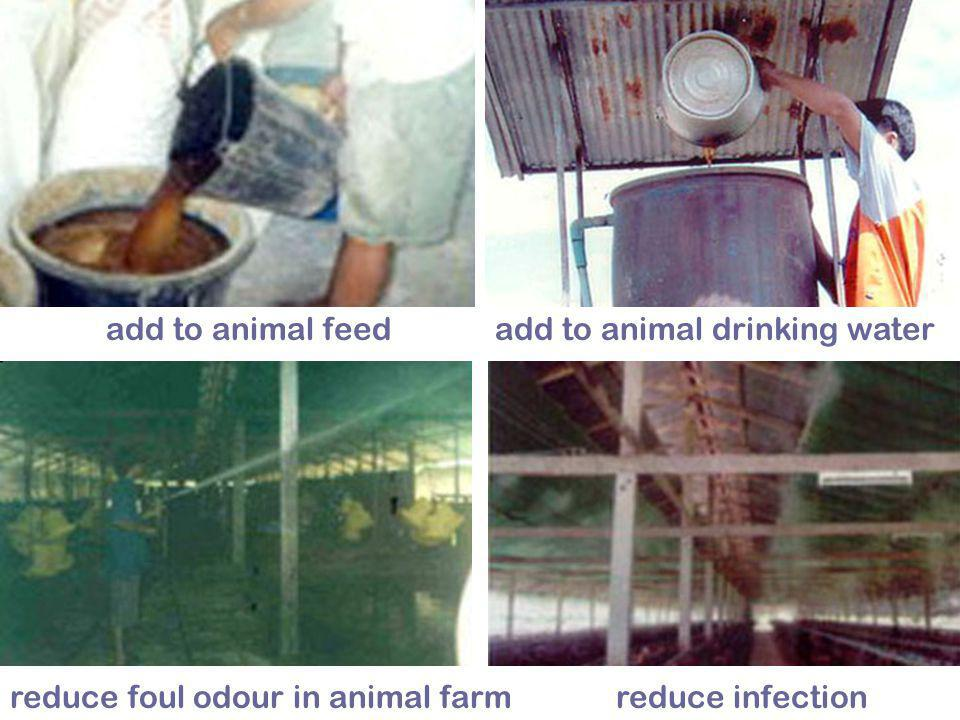add to animal feed add to animal drinking water Photos source: http://www.ueog.org reduce foul odour in animal farm reduce infection