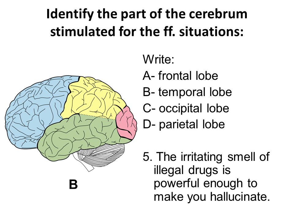 Identify the part of the cerebrum stimulated for the ff.