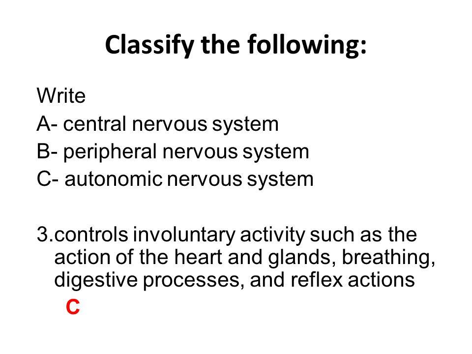 Identify the following: Write: A- cerebrum B- cerebellum C- brain stem 1. C. brain stem