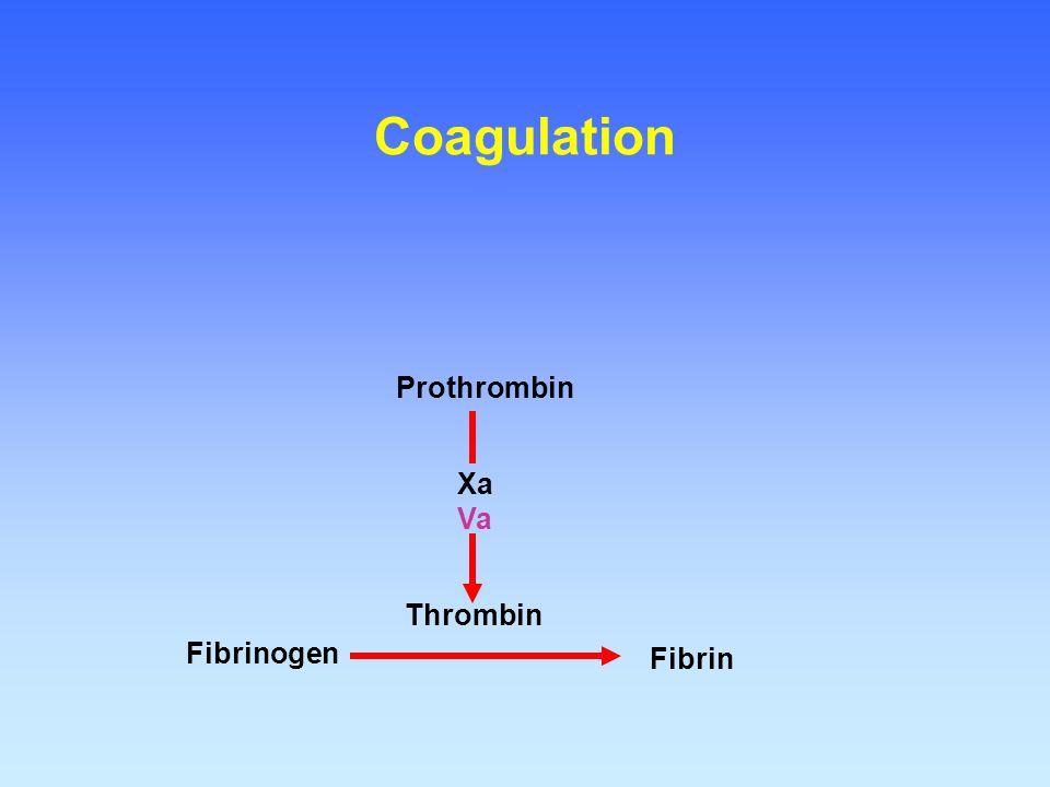 Fibrinogen Fibrin Thrombin Prothrombin Xa Va Coagulation