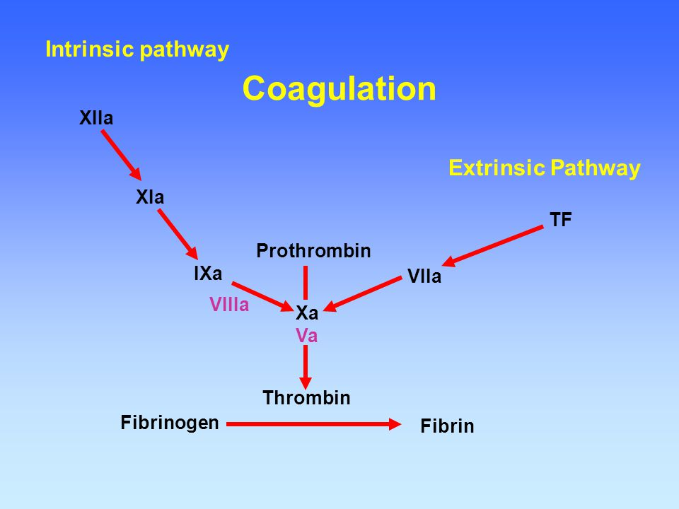 Fibrinogen Fibrin Thrombin Prothrombin Xa Va VIIa TF IXa VIIIa XIa XIIa Extrinsic Pathway Intrinsic pathway Coagulation