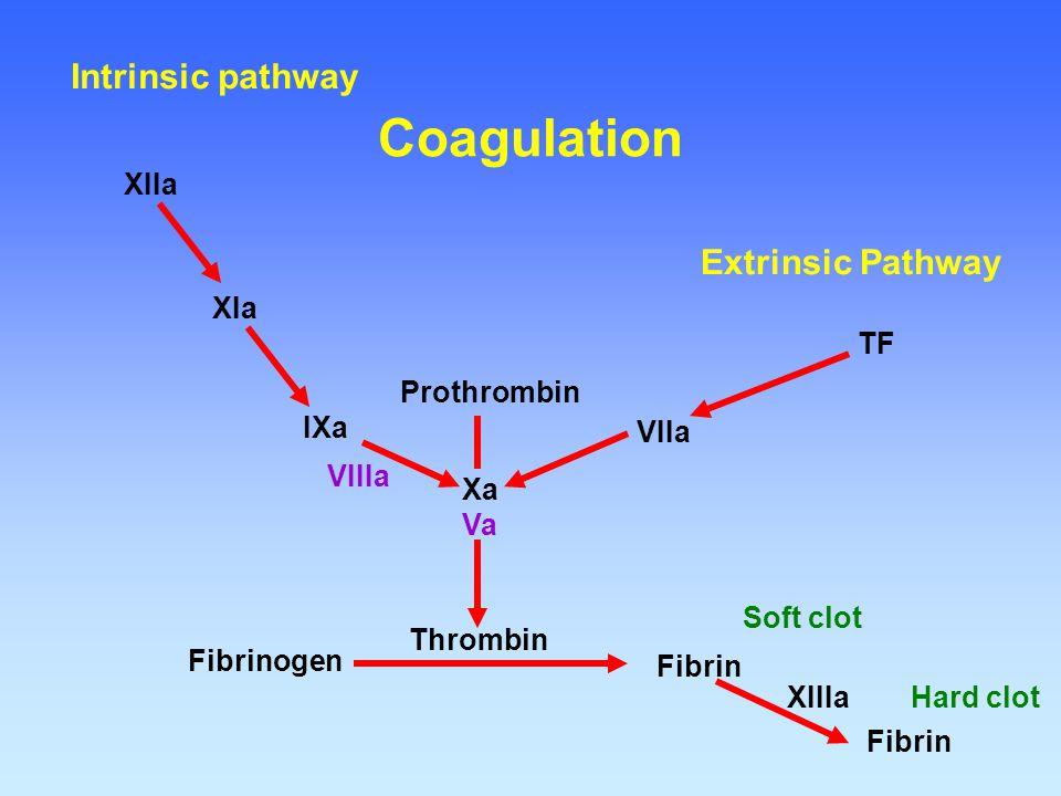 Fibrinogen Fibrin Thrombin Prothrombin Xa Va VIIa TF IXa VIIIa XIa XIIa XIIIa Soft clot Fibrin Hard clot Extrinsic Pathway Intrinsic pathway Coagulati