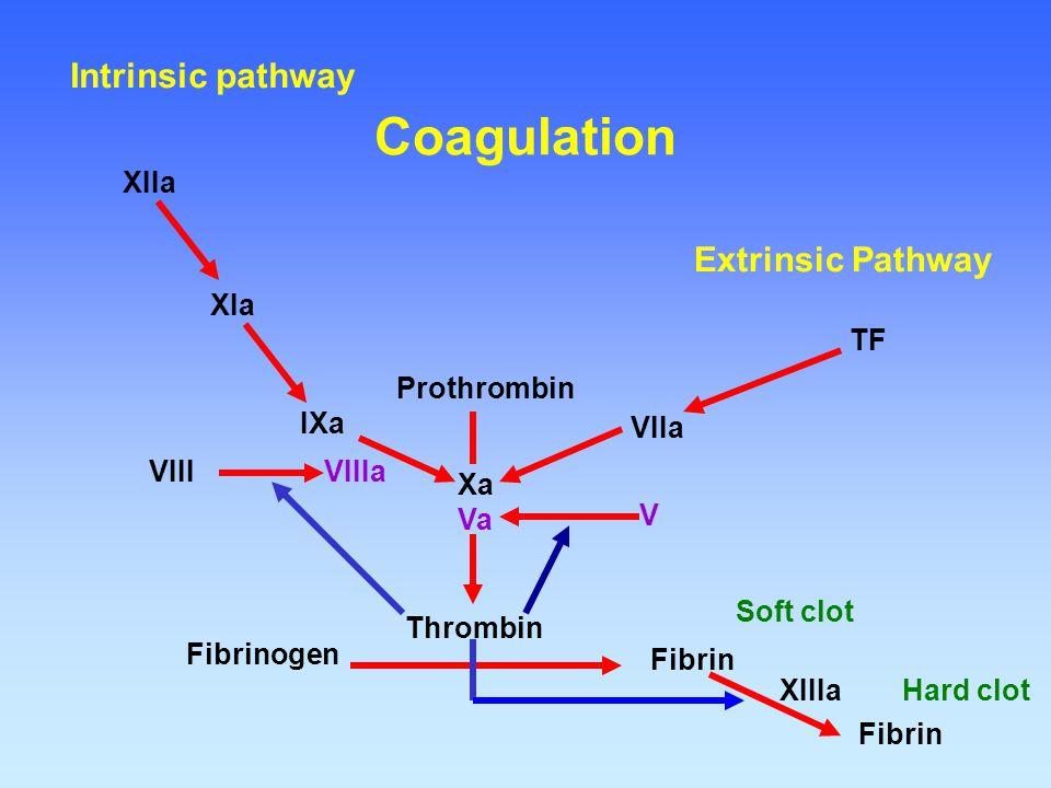 Fibrinogen Fibrin Thrombin Prothrombin Xa Va VIIa TF IXa VIIIa XIa XIIa XIIIa Soft clot Fibrin Hard clot V VIII Extrinsic Pathway Intrinsic pathway Co