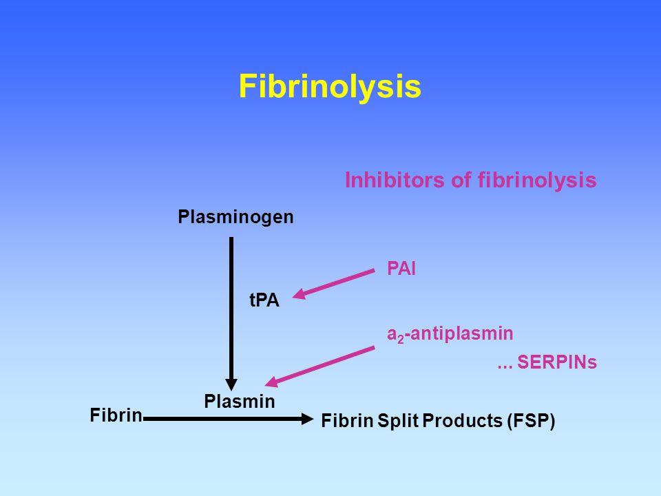 Fibrin Fibrin Split Products (FSP) Plasmin Plasminogen tPA Fibrinolysis Inhibitors of fibrinolysis PAI a 2 -antiplasmin... SERPINs