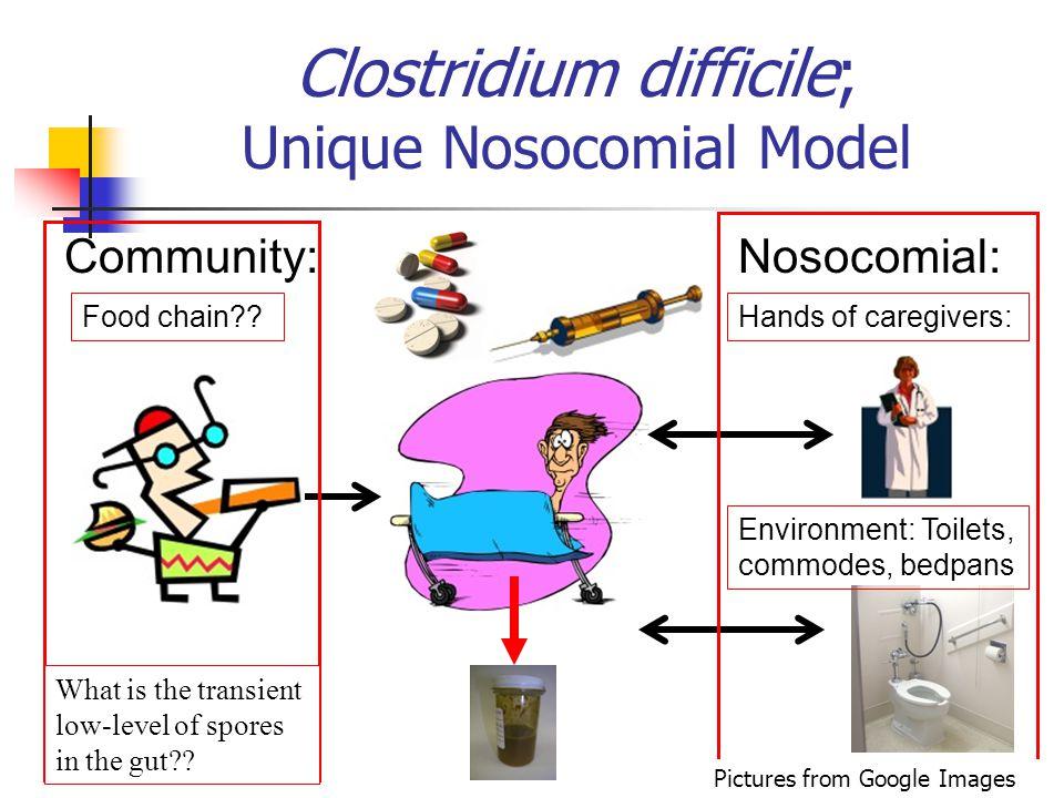 Clostridium difficile; Unique Nosocomial Model Food chain?? Community:Nosocomial: Hands of caregivers: Environment: Toilets, commodes, bedpans What is