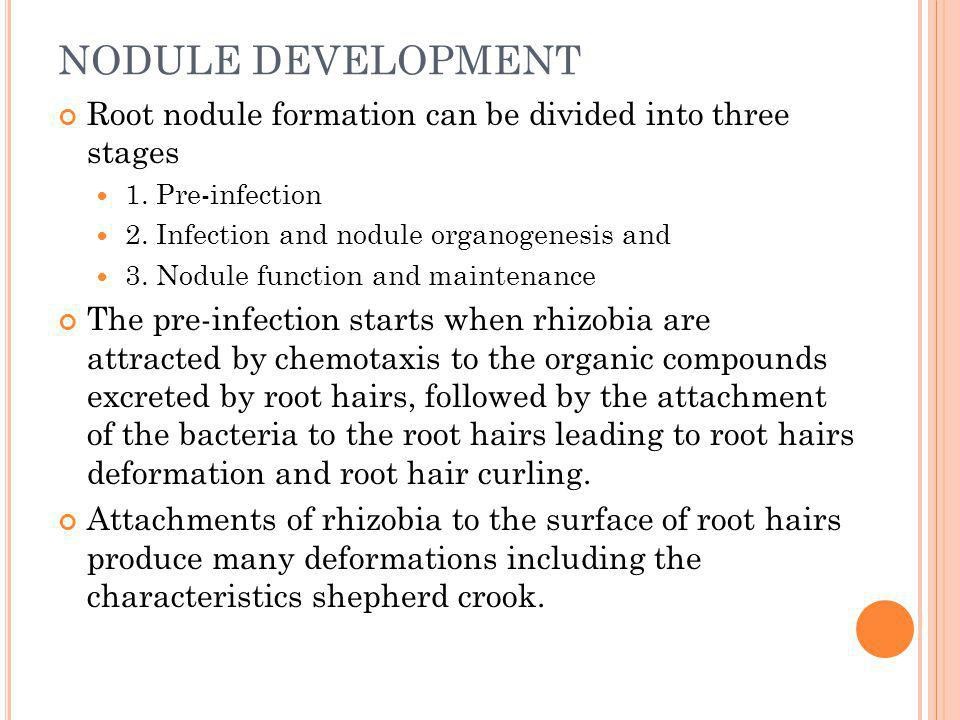 NODULE DEVELOPMENT Root nodule formation can be divided into three stages 1. Pre-infection 2. Infection and nodule organogenesis and 3. Nodule functio