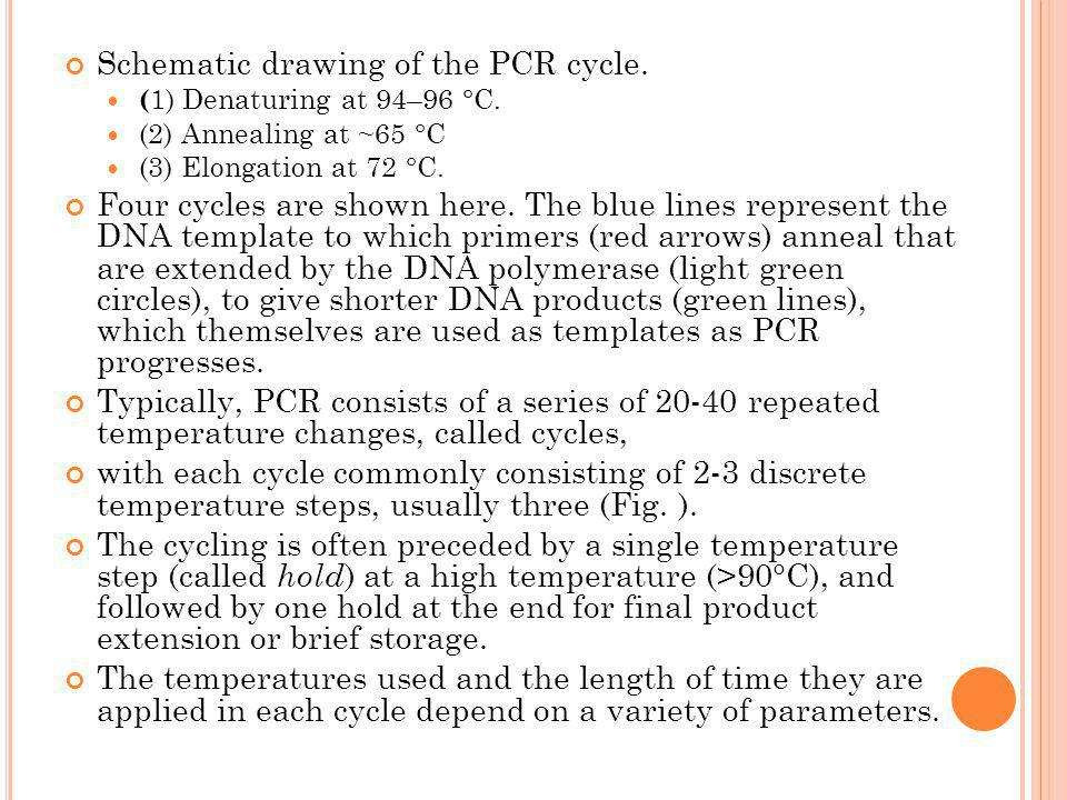 Schematic drawing of the PCR cycle. ( 1) Denaturing at 94–96 °C. (2) Annealing at ~65 °C (3) Elongation at 72 °C. Four cycles are shown here. The blue