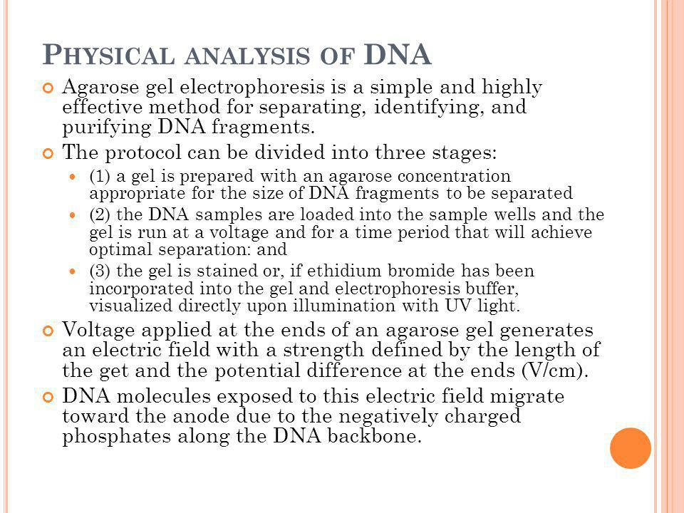 P HYSICAL ANALYSIS OF DNA Agarose gel electrophoresis is a simple and highly effective method for separating, identifying, and purifying DNA fragments