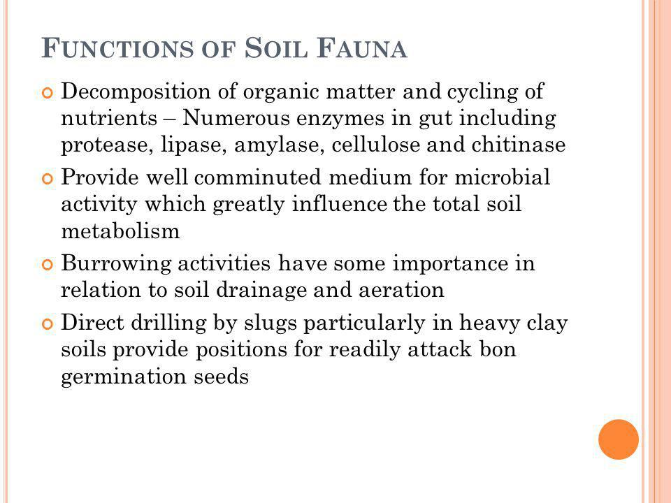 F UNCTIONS OF S OIL F AUNA Decomposition of organic matter and cycling of nutrients – Numerous enzymes in gut including protease, lipase, amylase, cel