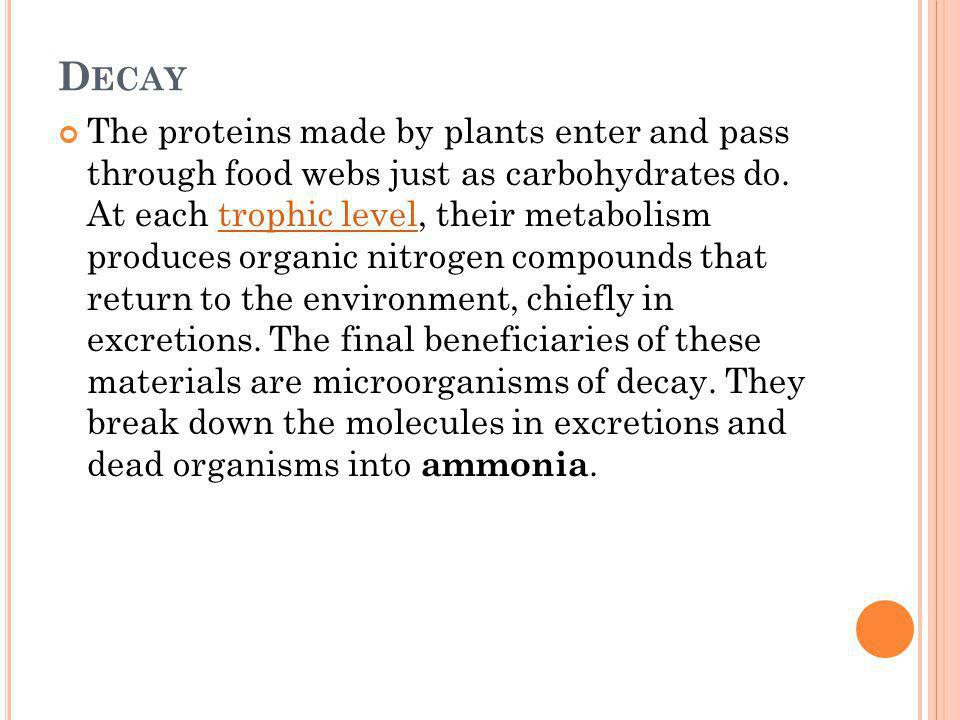 D ECAY The proteins made by plants enter and pass through food webs just as carbohydrates do. At each trophic level, their metabolism produces organic