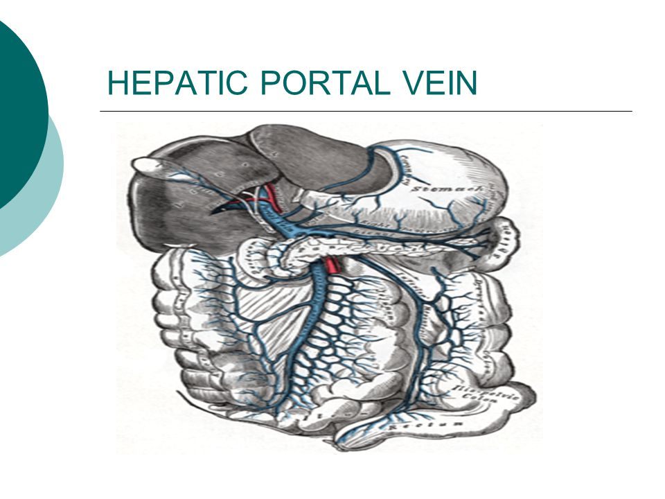 HEPATIC PORTAL VEIN
