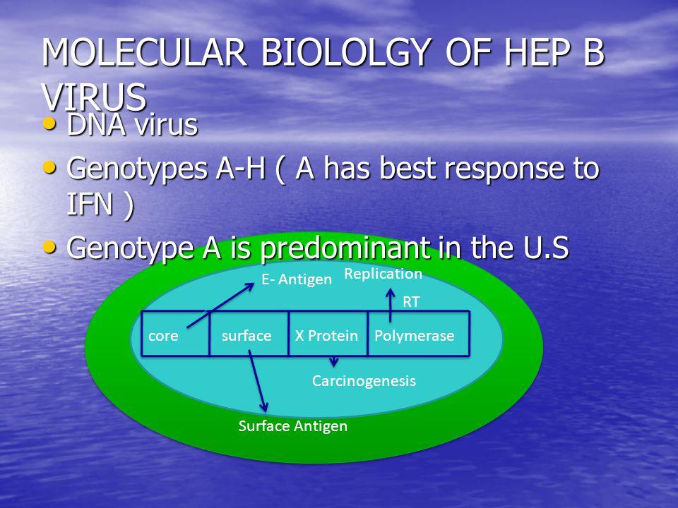 Testing for HBV DNA Qualitative PCR is a more sensitive method of detecting HBV DNA than quantitative PCR.