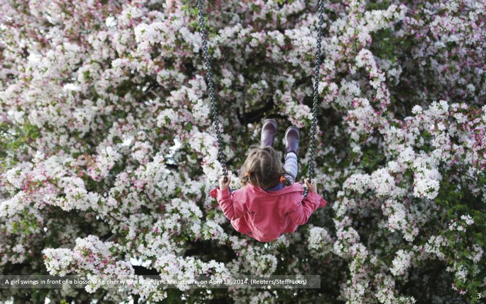 A man takes a picture of a woman with cherry blossoms in full bloom in Tokyo. Reuters 2