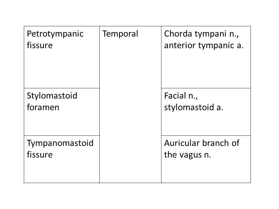 Petrotympanic fissure TemporalChorda tympani n., anterior tympanic a. Stylomastoid foramen Facial n., stylomastoid a. Tympanomastoid fissure Auricular