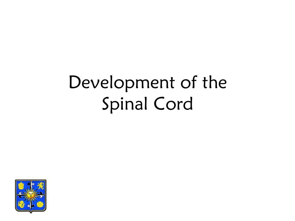 Primary Division of the Developing Brain Primary vesicle Primary division Subdivision Adult structures Forebrain vesicle Prosencephalon Telencephalon