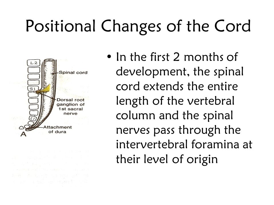 The Sectional Organization of the Spinal Cord
