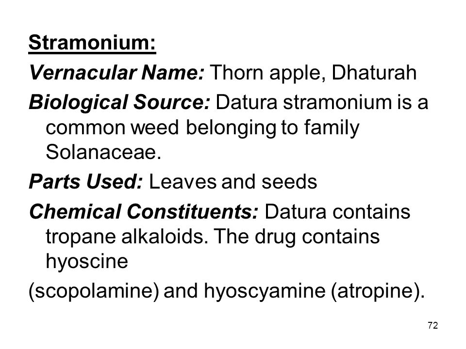 72 Stramonium: Vernacular Name: Thorn apple, Dhaturah Biological Source: Datura stramonium is a common weed belonging to family Solanaceae. Parts Used
