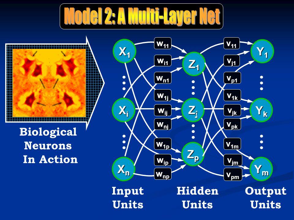 Biological Neurons In Action llllll Hidden Units llllll Z1Z1Z1Z1 ZjZjZjZj ZpZpZpZp Output Units Y1Y1Y1Y1 llllll YkYkYkYk llllll YmYmYmYm Input Units llllll llllll XiXiXiXi X1X1X1X1 XnXnXnXn w 11 w i1 w n1 w 1j w ij w nj w 1p w ip w np v 11 v j1 v p1 v 1k v jk v pk v 1m v jm v pm