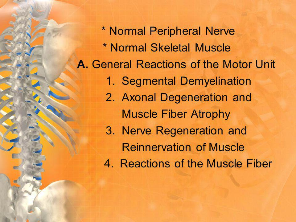 * Normal Peripheral Nerve * Normal Skeletal Muscle A.