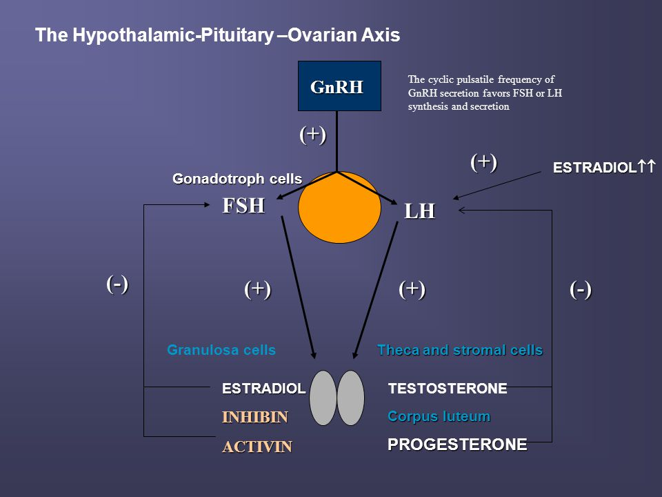 Laboratory findings in primary amenorrhea (+ absence of sexual maturation)- ovarian failure with prepuberal onset n Hormonal assessment: FSH, LH, E2 n → ↓/ low-normal FSH, LH + ↓E2 = secondary (central ) ovarian failure with prepuberal onset n In these patients, LH and FSH responses to testing with GnRH may help to differentiate delayed puberty from a more serious problem n do hormonal, neuroradiologic and neuro-ophatalmologic assessment of hypothalamus and pituitary ( e.g.