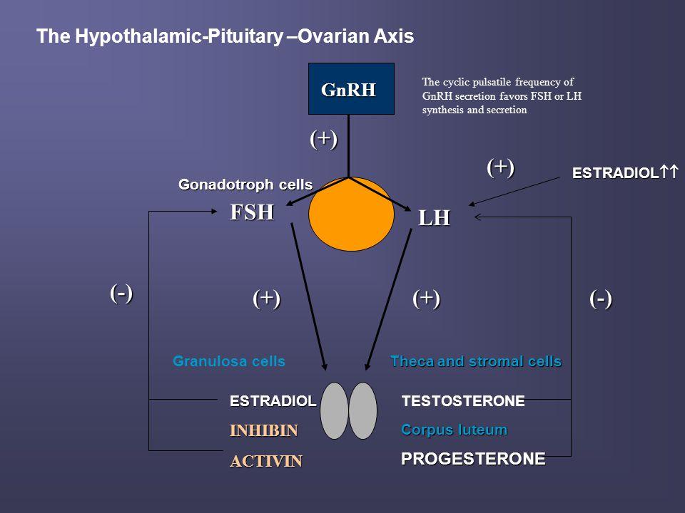 Evaluation of Male Hypogonadism n SEMEN ANALYSIS n TESTICULAR BIOPSY