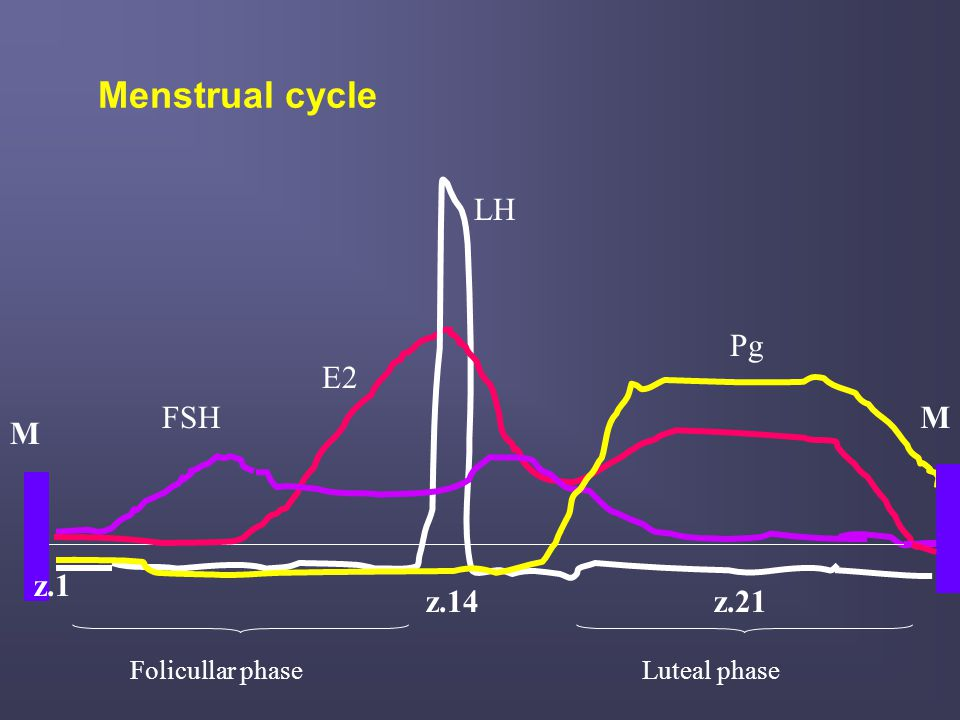 Evaluation of ovarian function I.DIRECT HORMONAL ASSESSMENT : plasma levels of FSH, LH, E2, Pg As a consequence of the changing rates of secretion of estrogens and progesterone throughout the menstrual cycle: n The basal functional status of the HPT-HPF-OVARIAN AXIS should be explored during early follicular phase (days:2-4): FSH, LH, E2 n The ovulation: during days :13-15 –the most common way is to detect the LH surge [measurement of urinary LH) (ovulation typically occurs 34-36 hours after the onset of the LH surge) [to predict that ovulation is going to occur] n Activity of corpus luteum - measurement of midluteal serum progesterone concentration (days:21-23) : - is used to document the occurrence of ovulation ( Pg>3ng/ml – indication that ovulation has occurred) - is used to assess a luteal phase defect ( Pg< 10 ng/ml suggests a luteal phase defect)
