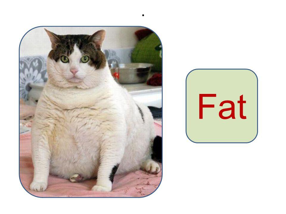. Fat