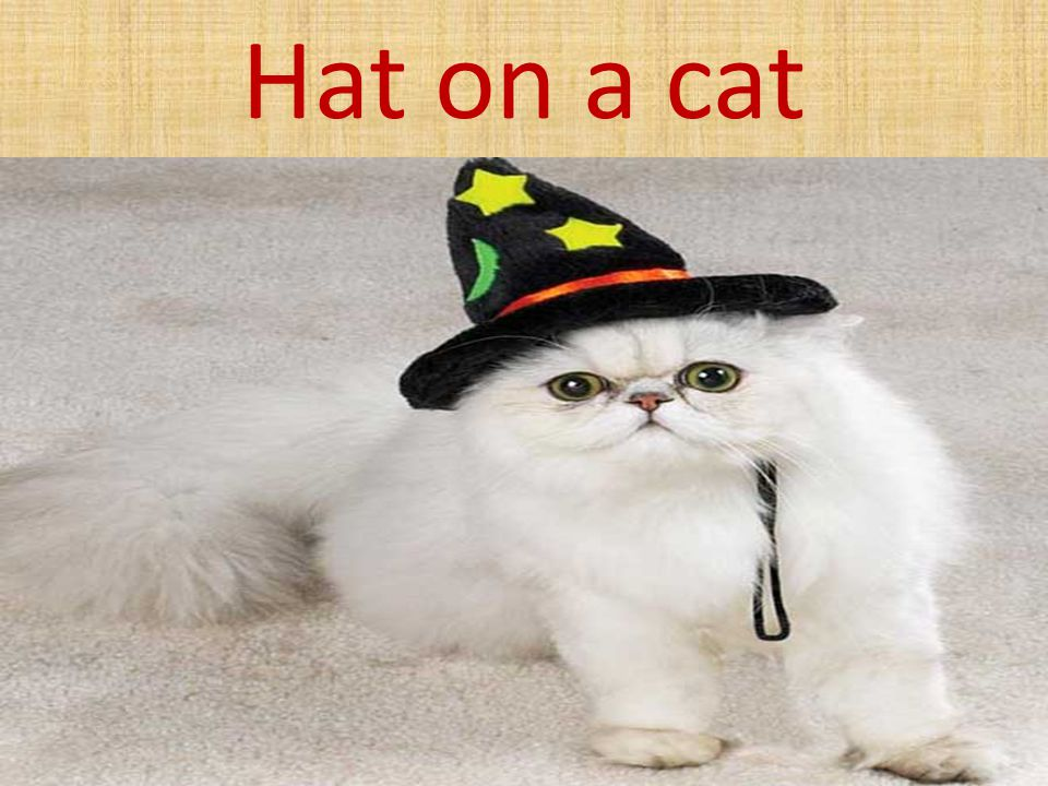 Hat on a cat