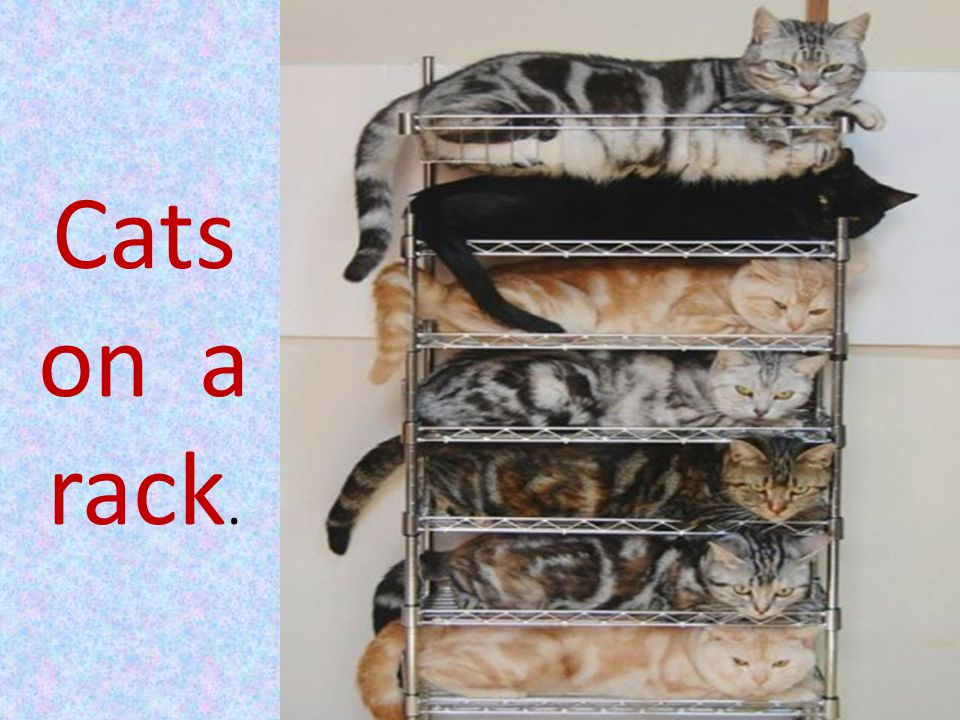 Cats on a rack.
