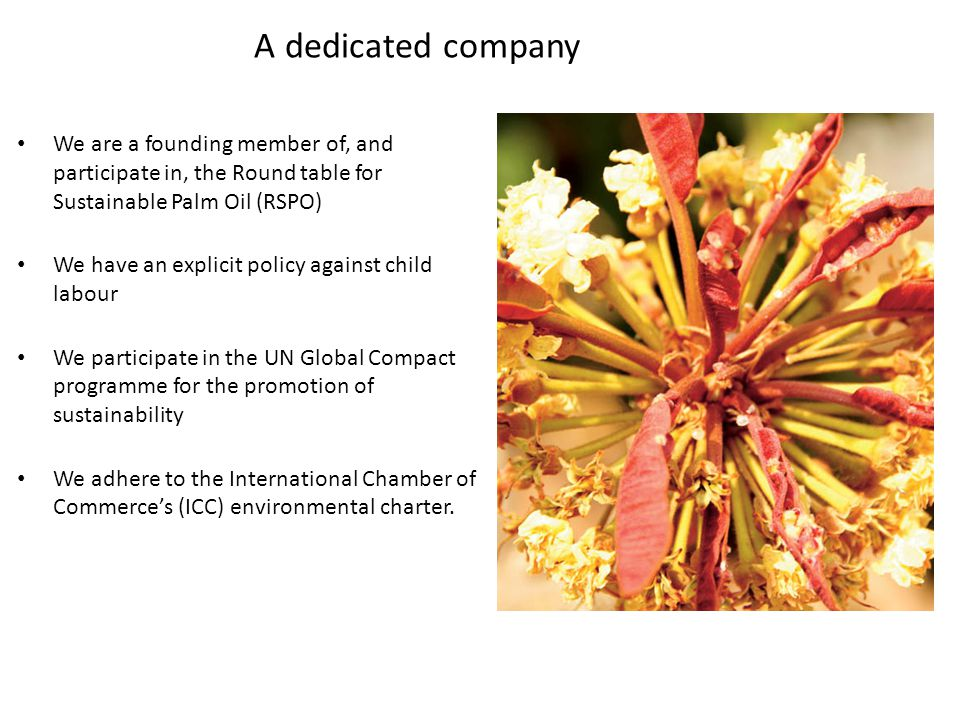 A dedicated company We are a founding member of, and participate in, the Round table for Sustainable Palm Oil (RSPO) We have an explicit policy against child labour We participate in the UN Global Compact programme for the promotion of sustainability We adhere to the International Chamber of Commerce's (ICC) environmental charter.