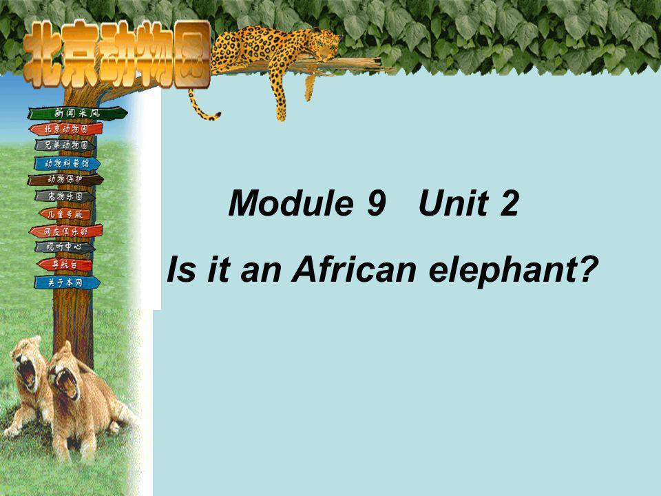 Module 9 Unit 2 Is it an African elephant