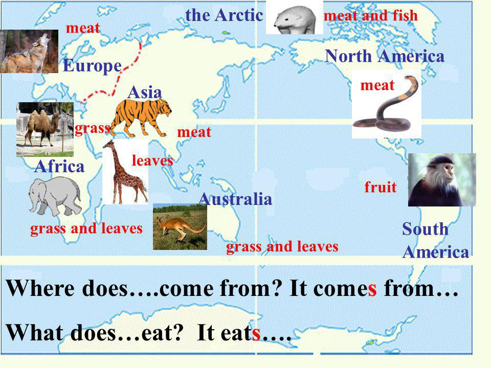 Europe Asia Africa Australia North America South America the Arctic meat meat and fish grass and leaves meat grass fruit grass and leaves leaves meat Where does….come from.