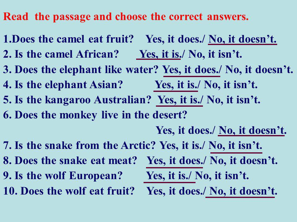 1.Does the camel eat fruit. Yes, it does./ No, it doesn't.