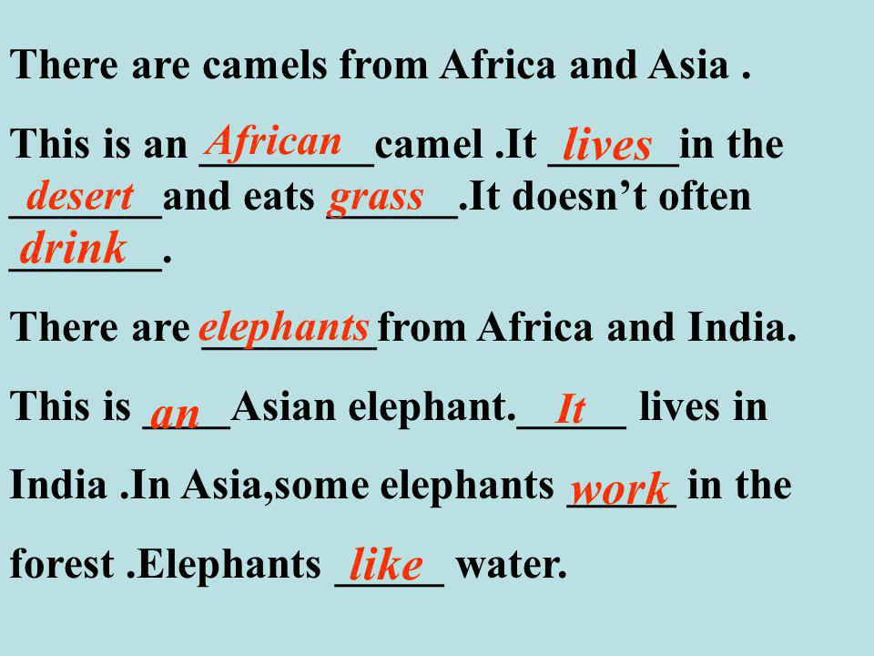 There are camels from Africa and Asia.