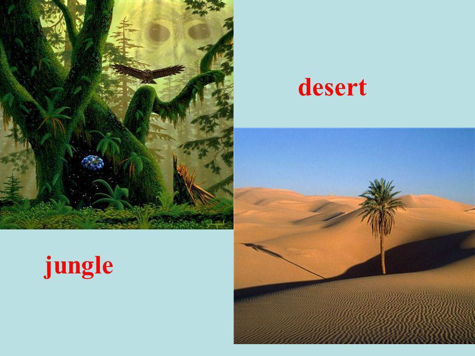 jungle desert