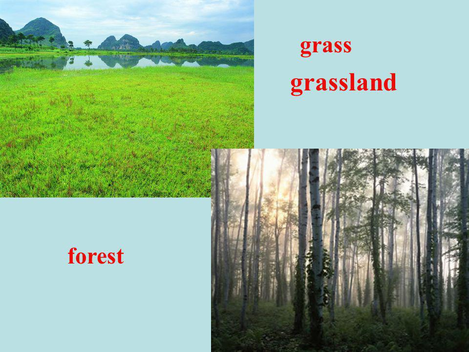 grassland grass forest