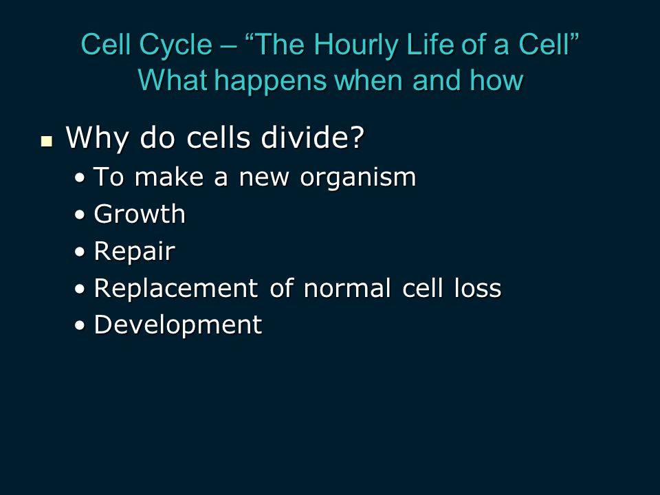 Cell Cycle – The Hourly Life of a Cell What happens when and how Why do cells divide.