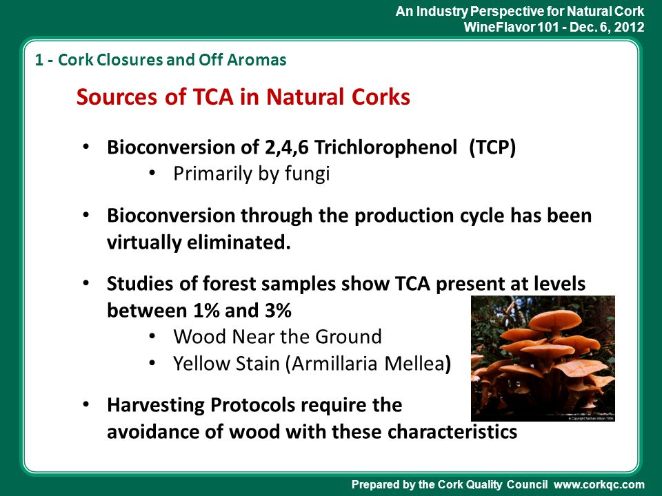 An Industry Perspective for Natural Cork WineFlavor 101 - Dec. 6, 2012 Prepared by the Cork Quality Council www.corkqc.com Sources of TCA in Natural C