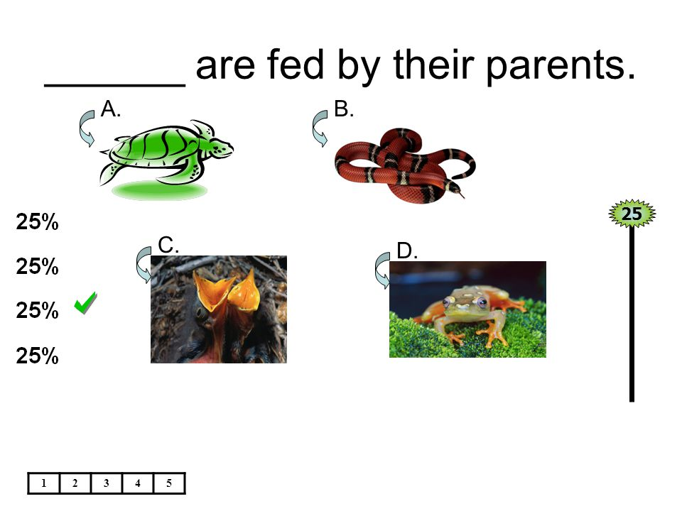 ______ are fed by their parents. 25 12345 A.B. C. D.