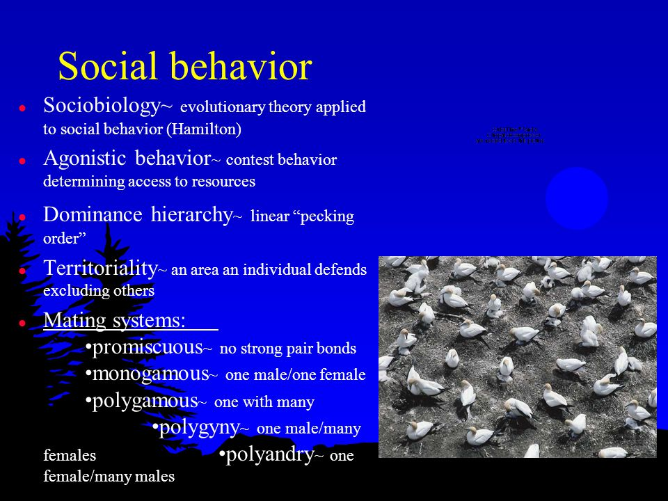 Altruistic behavior l Inclusive fitness ~ total effect an individual has on proliferating its genes by its own offspring and aid to close relatives l Coefficient of relatedness ~ proportion of genes that are identical because of common ancestors l Kin selection ~ aiding related individuals altruistically l Reciprocal altruism ~ exchange of aid; humans?