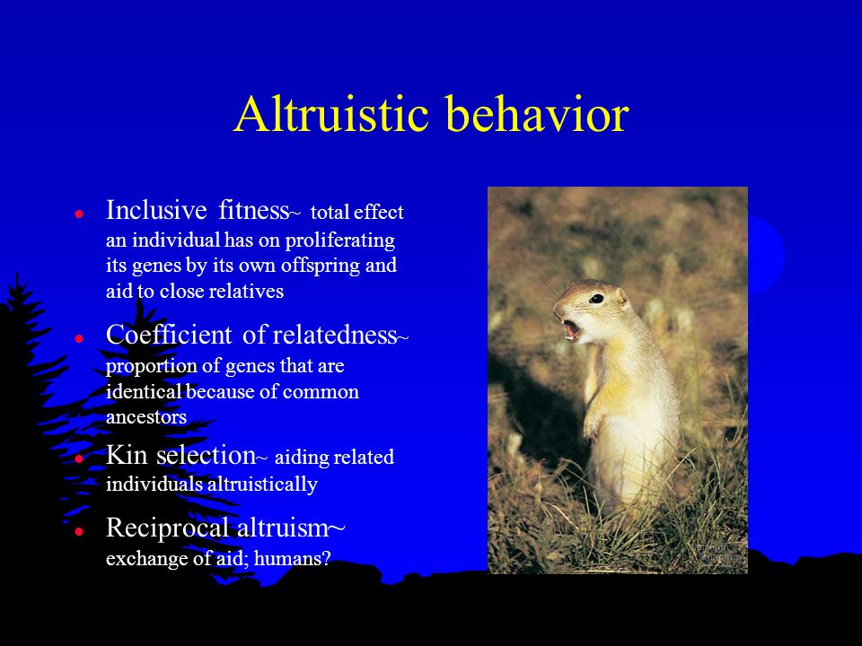 Altruistic behavior l Inclusive fitness ~ total effect an individual has on proliferating its genes by its own offspring and aid to close relatives l Coefficient of relatedness ~ proportion of genes that are identical because of common ancestors l Kin selection ~ aiding related individuals altruistically l Reciprocal altruism ~ exchange of aid; humans
