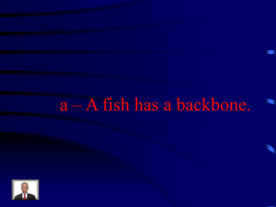 How is a fish different from a jellyfish. a – A fish has a backbone.