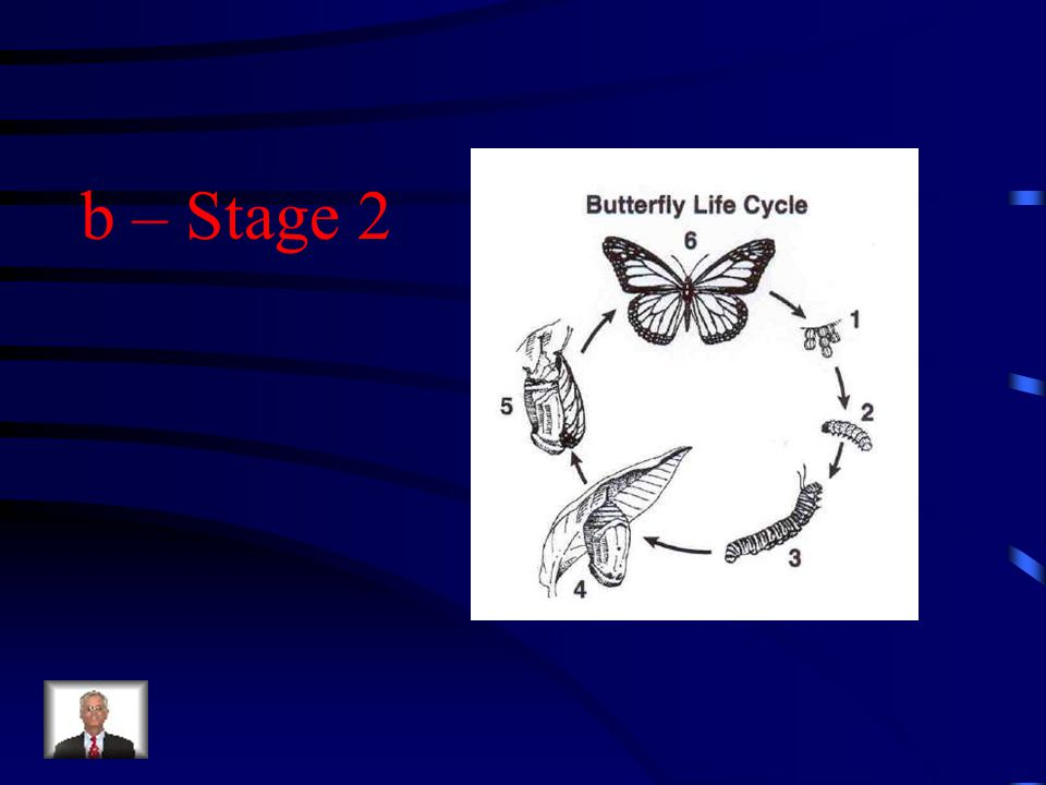 During certain stages of a butterfly's life cycle, the butterfly helps plants by pollinating their flowers.
